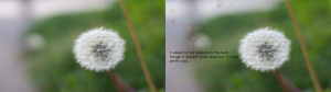the photo on the right is a dandelion, the right is the dandelion with the hot air balloons blended behind it