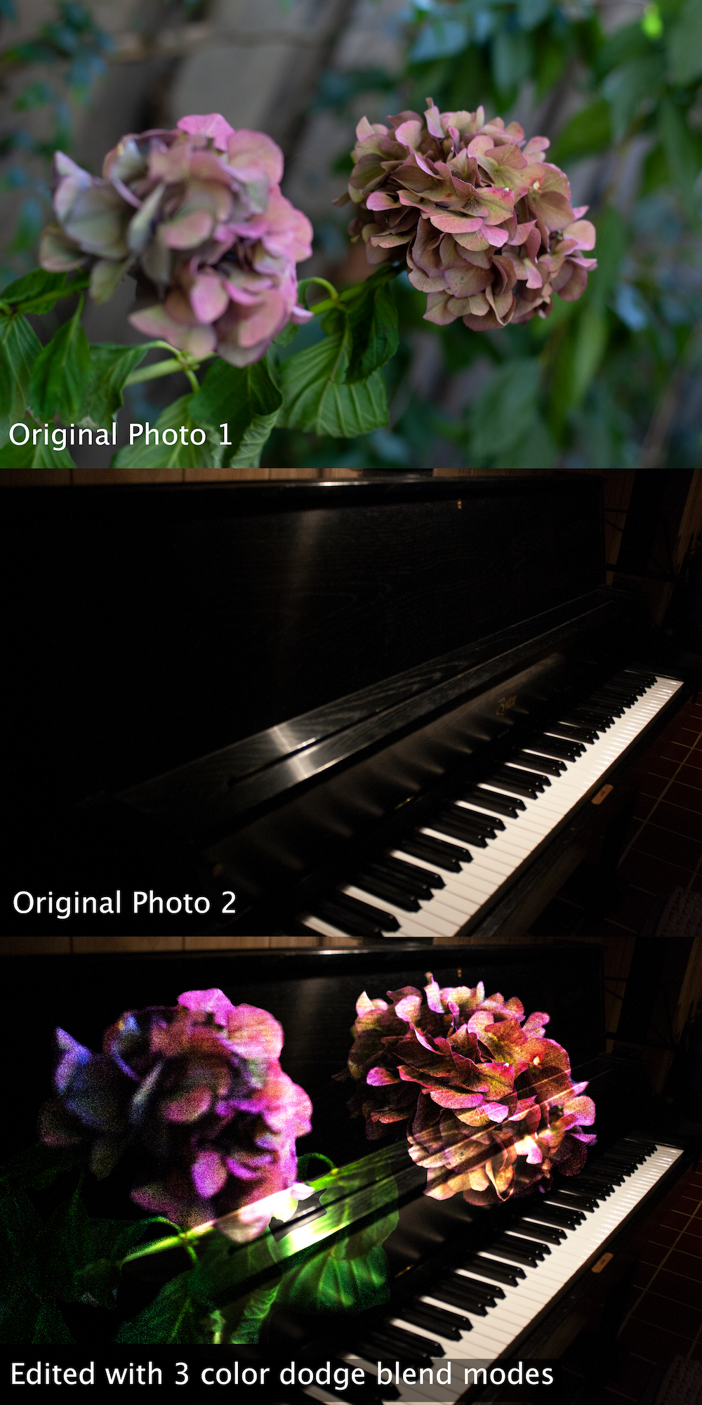 Creative Blend Modes: Piano + Flowers