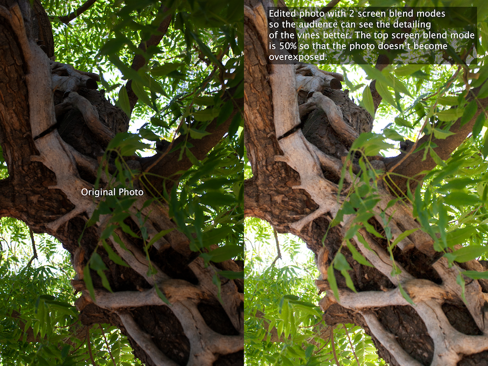 Screen Blend Modes on a Vine