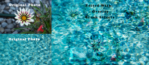 Two photos. One of a flower and the other of a pool. They are edited to be on the same photo using Photoshop