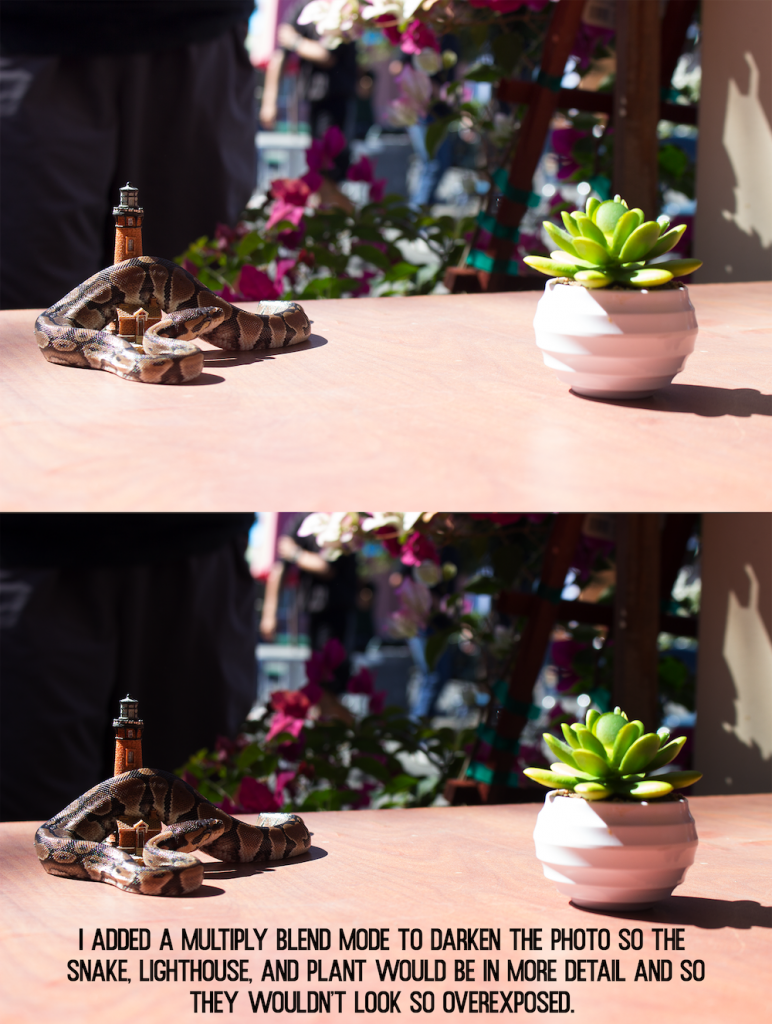 multiply blend mode photo of a snake, lighthouse toy, and succulent plant