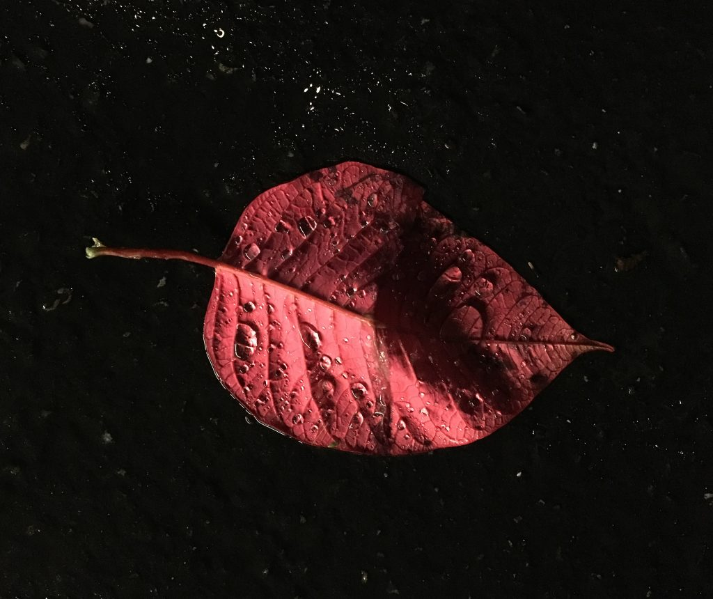 A red leaf illuminated by store lights in the night after the rain.