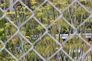 Picture of wild flowers through metal fence