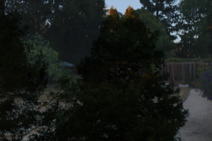 Overlay of Shot of Tall, Dark Trees Over Shot of Background
