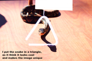A snake in a white triangle