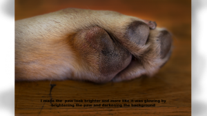 the paw of a dog