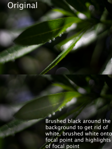 brushed black around the background using overlay, white brushed on focal point on an image of a leaf
