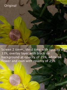 Original versus edited version using overlay blend modes on a yellow flower