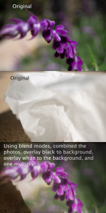Image of lavender and a tissue, multiplied together to create one image that looks like a wrinkled flower.